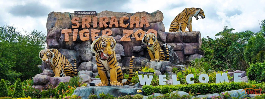Sriracha Tiger Zoo Pattaya Flat 32% off - Tour