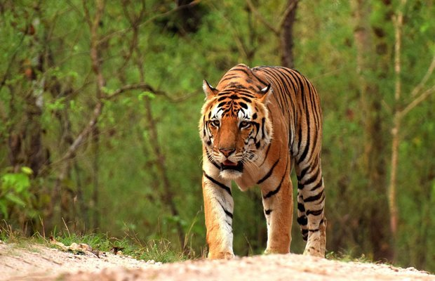 Taj Mahal with Bandhavgarh - Tour