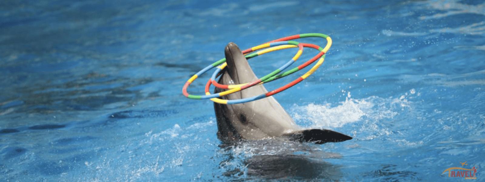 Dolphin Bay Phuket - Tour