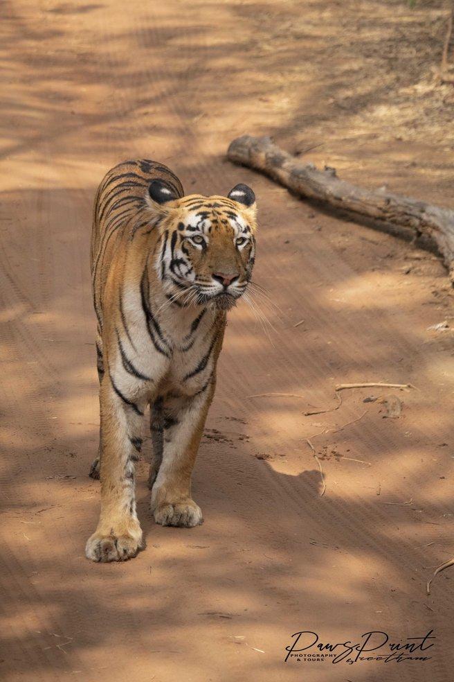 Tadoba Tiger Trails - Tour