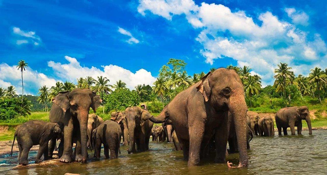Serene Sri Lanka - Tour