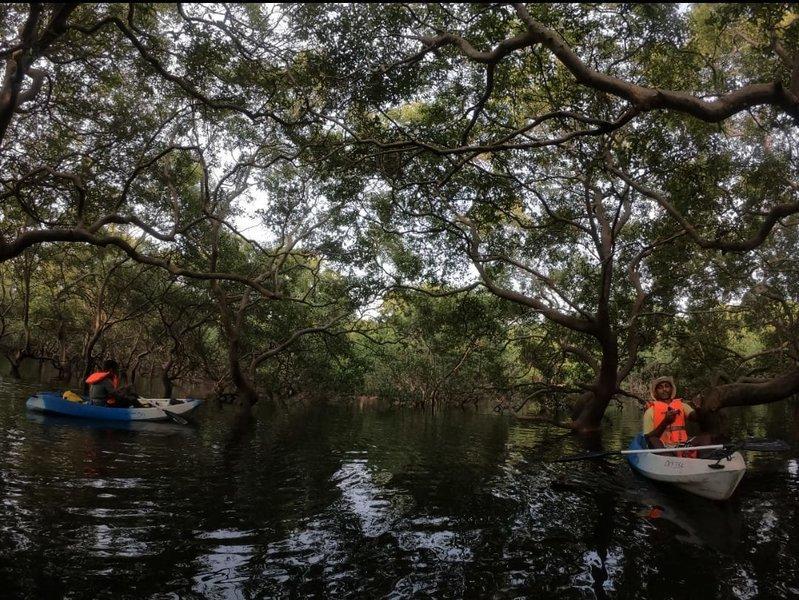 Backwater Kayaking Trail - Tour
