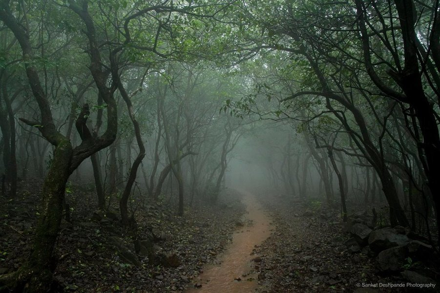 Overnight Excursion at Durshet with Andharban Forest Trek - Tour
