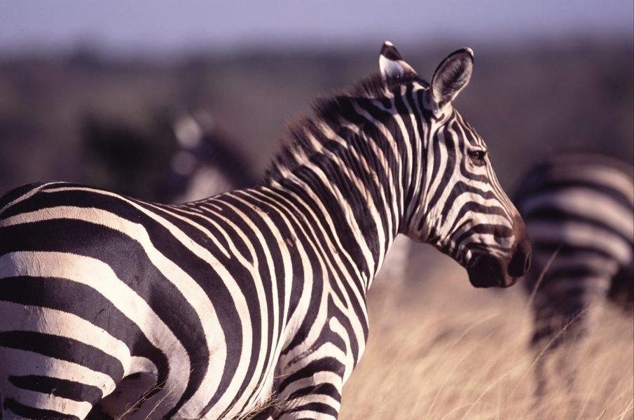 Kenya Bush Safari - Tour