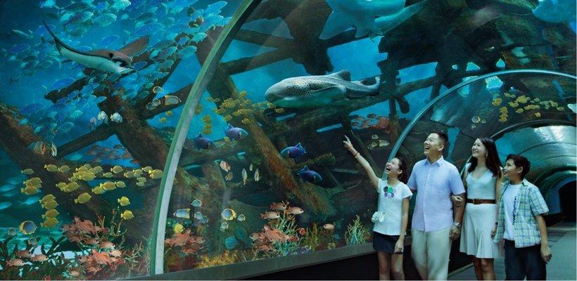 S.E.A. Aquarium Ticket Sentosa, Singapore - Tour