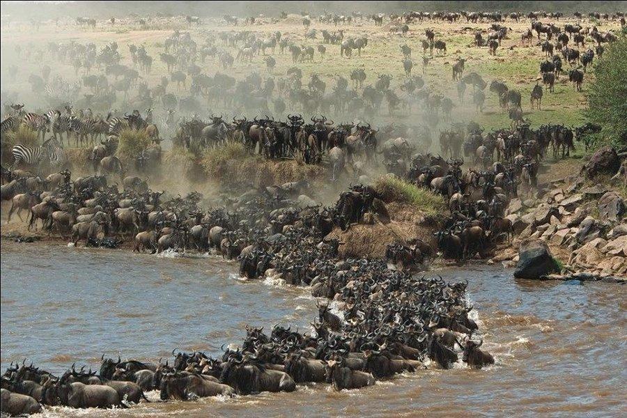 Migration Safari - Tour
