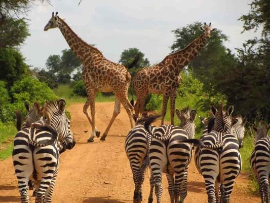 Ugandan Adventure - Tour