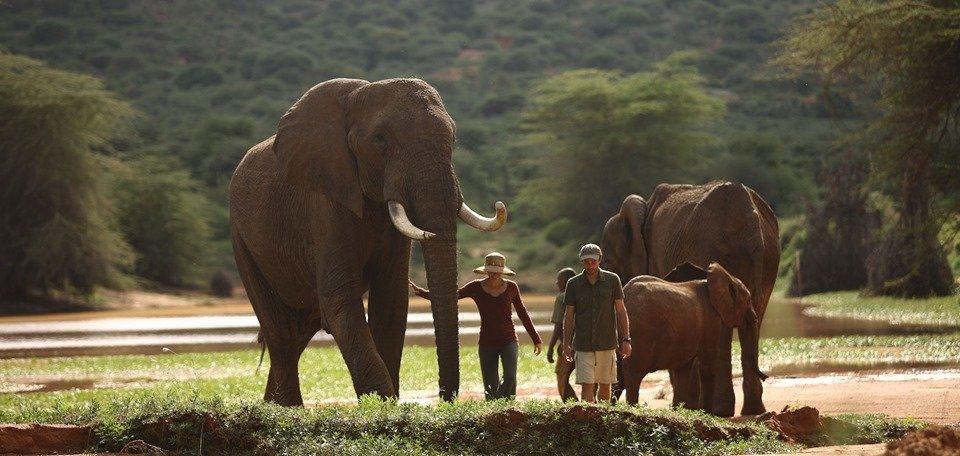 Ultimate Luxury Safari - Tour