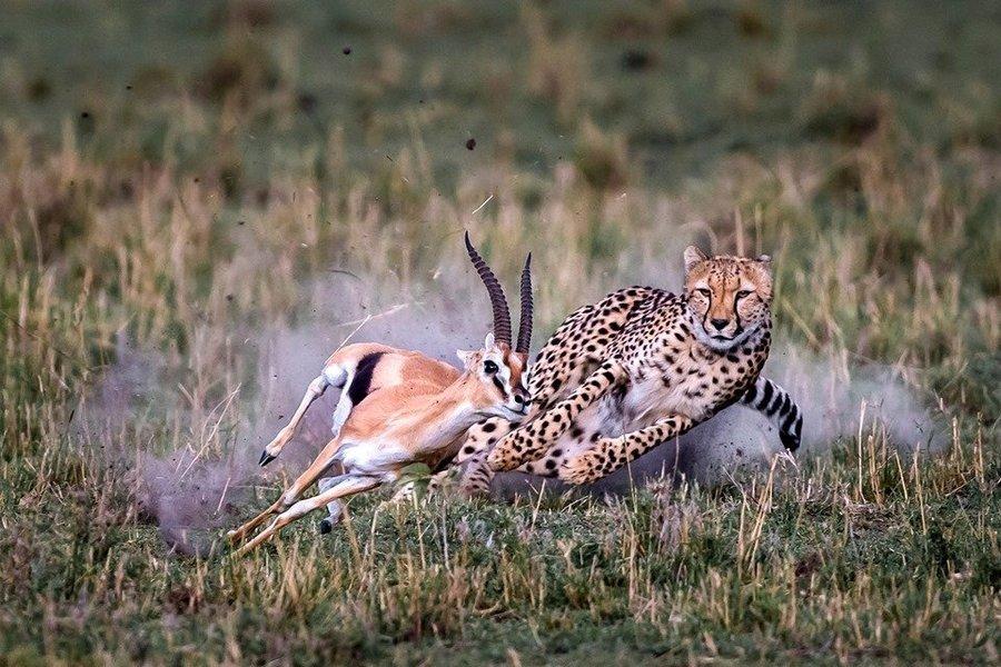 Northern Kenya Safari - Tour