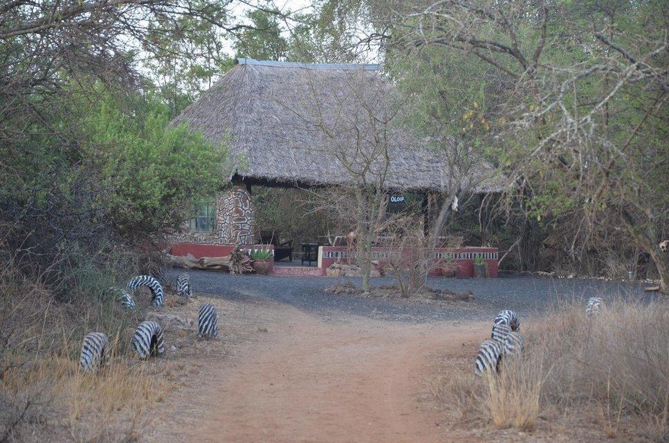 Maasai Simba - Tour