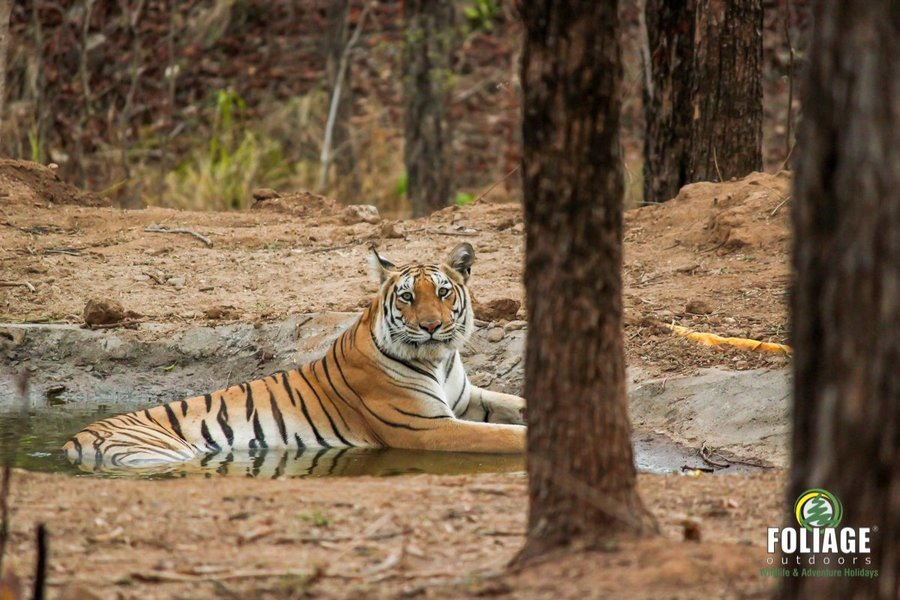 Pench Wildlife Camp - By Air - Tour