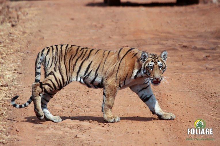 Tadoba Wildlife Camp - By Air - Tour