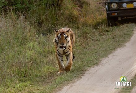 Kanha Wildlife Camp - By Air
