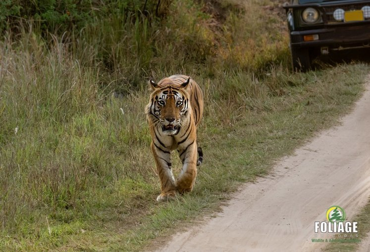 Kanha Wildlife Camp - By Air - Tour
