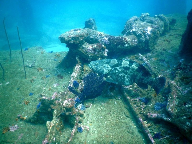 Goa Scuba Diving ( Wreck Diving ) - Tour