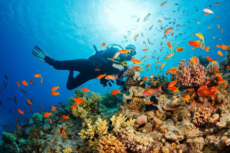 Scuba Diving Experience in Malvan from Goa - Tour