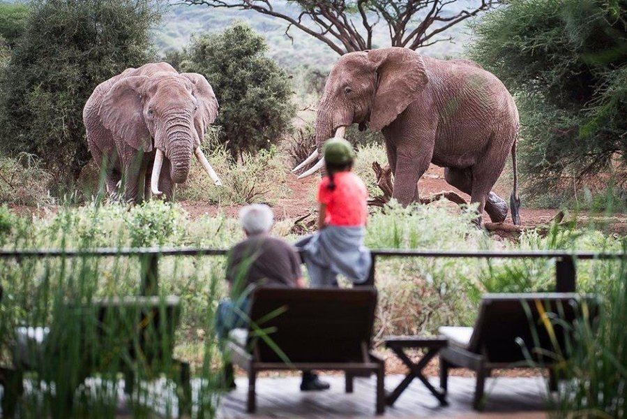 MAJESTIC ELEPHANT SAFARI - Tour