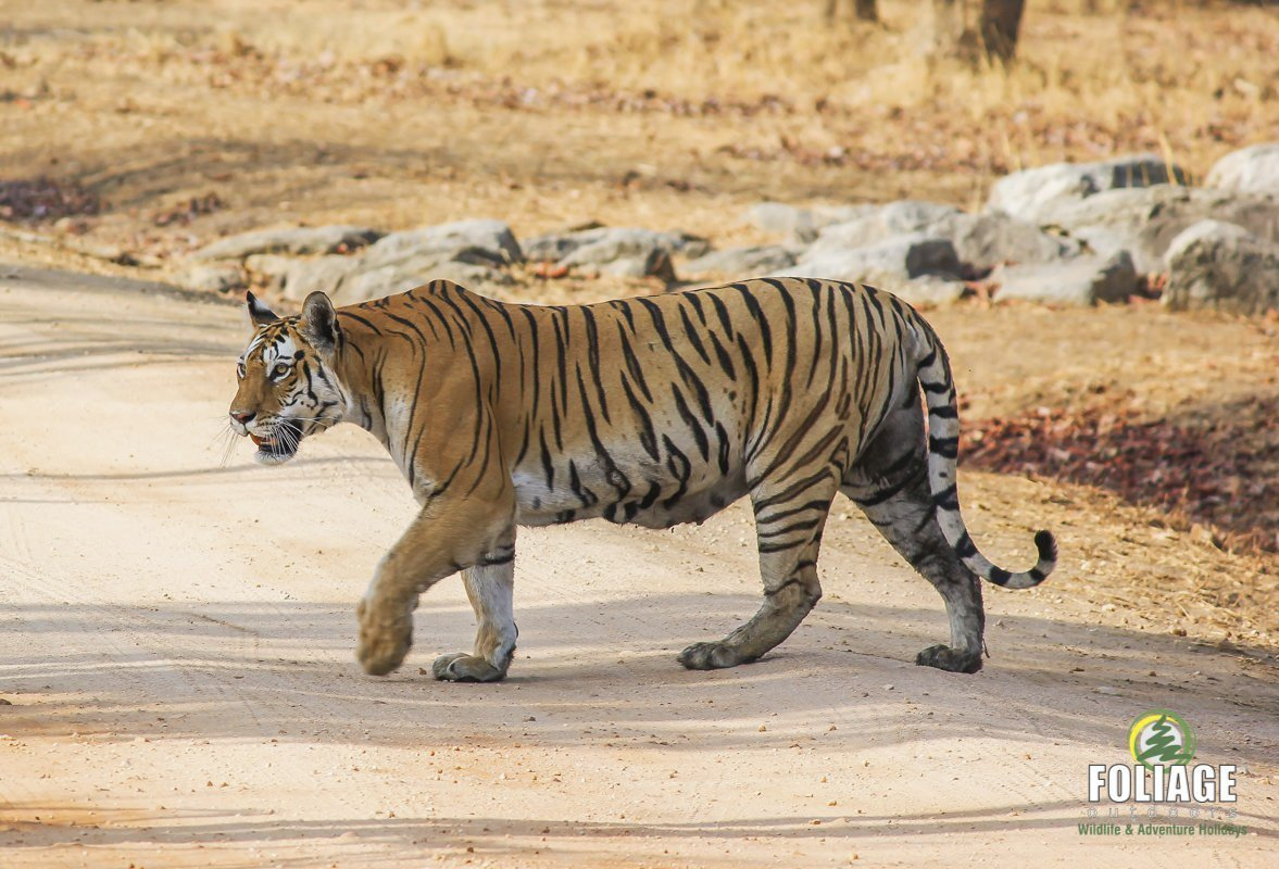 Pench Wildlife Camp | Triplog