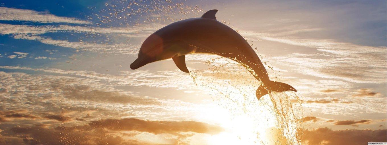 Dolphin Spotting Tour - Tour