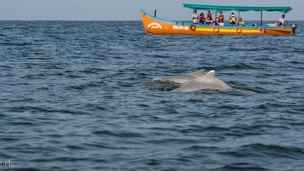 Ocean Biodiversity Experience - Tour