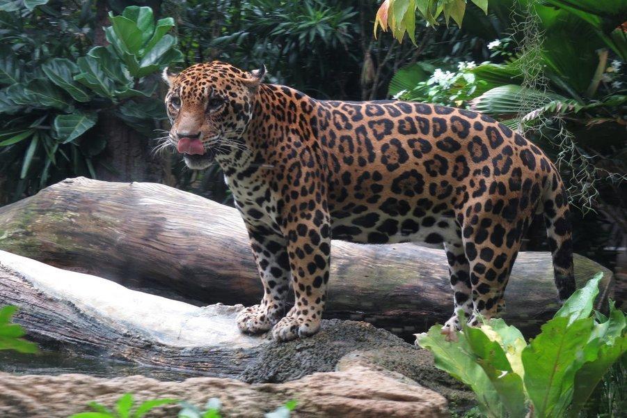 Singapore River Safari with Amazon River Quest - Tour