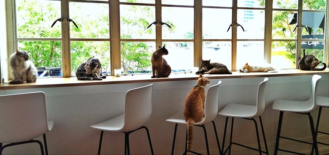 The Cat Cafe Entrance Fee in Bugis - Tour