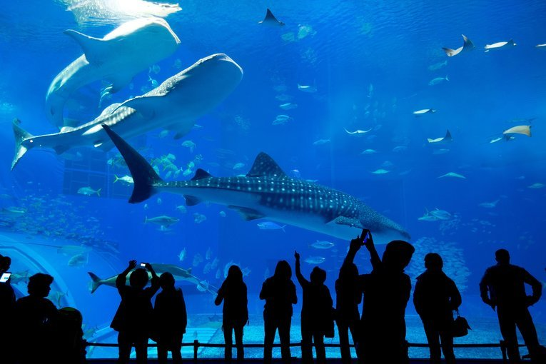 Langkawi Underwater World Admission Ticket - Tour