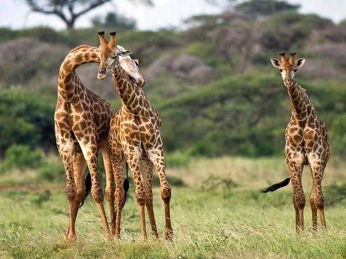 Fascinating South Africa Package - Tour
