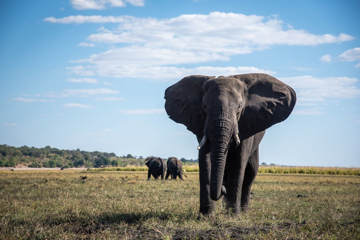 Wildlife Safaris in Zambia, Zimbabwe and Botswana - Collection