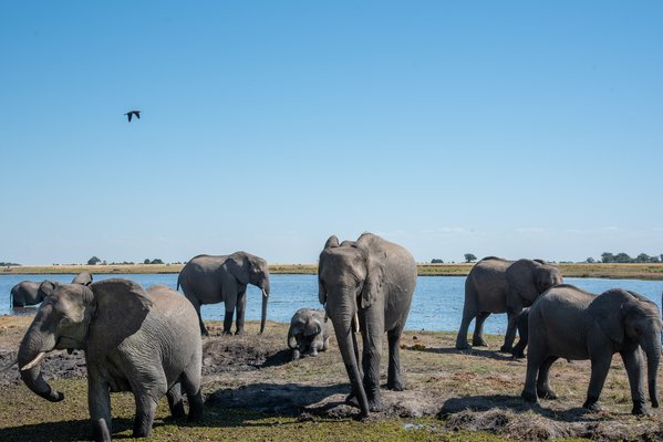 Chobe Day Tour: Game Drive and Boat Ride - Tour