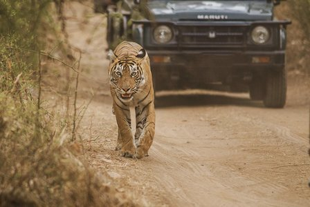End of Season Tour to Ranthambhore Tiger Reserve