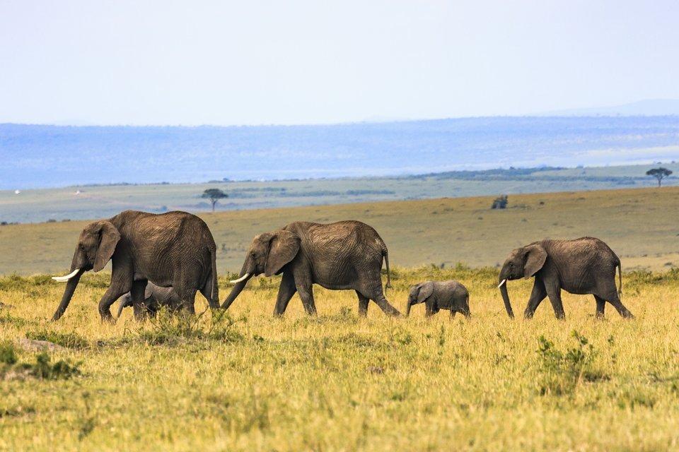 4 Days Serengeti and Ngorongoro Crater Safari - Tour