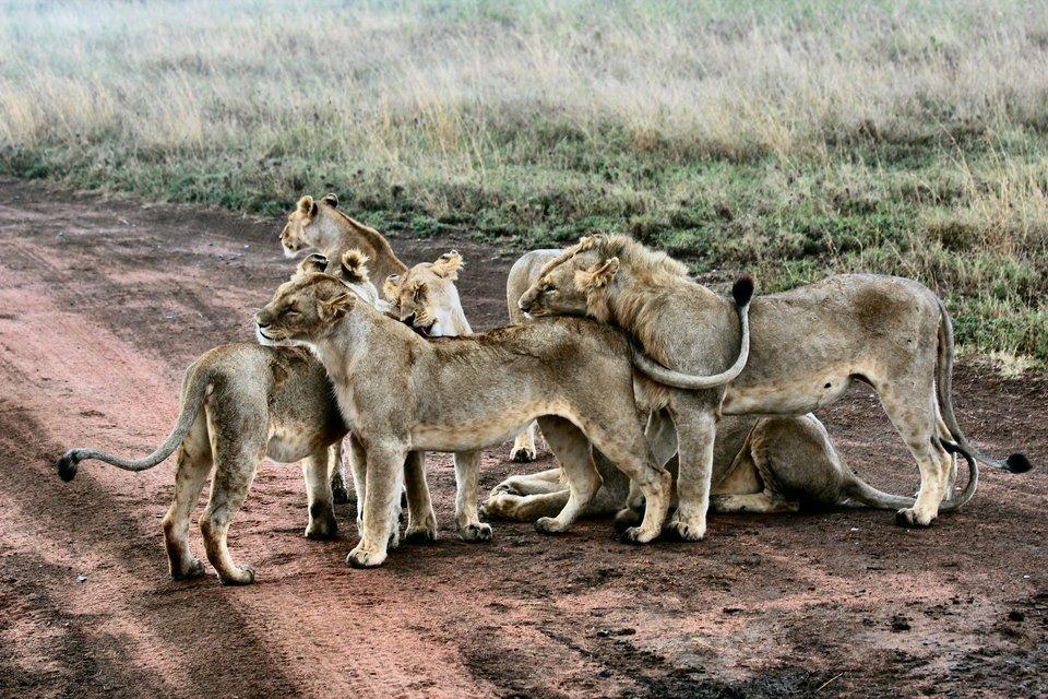 A Week of Wild Adventure in Tanzania - Tour