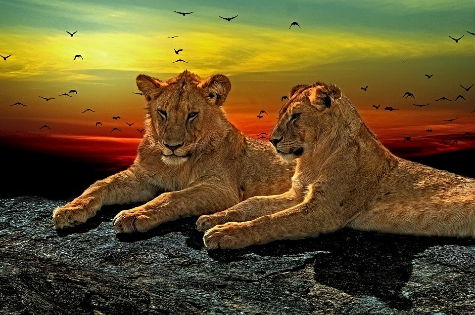 East Africa Private Jet Expedition - Tour