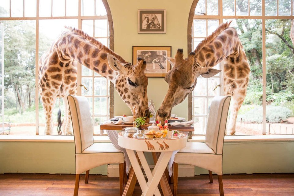 Giraffe Manor - Tour