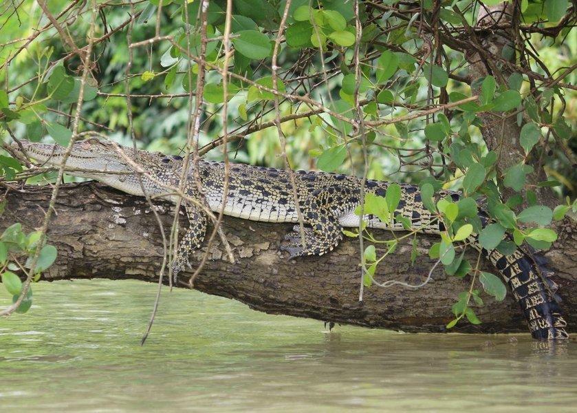 Venture to Myanmar Wildlife Sanctuary - Tour