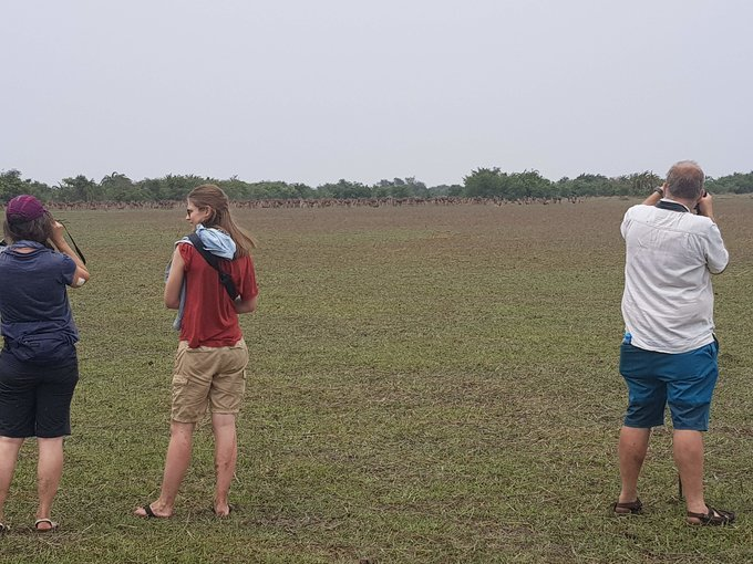 Hwange National Park Day Trip - Tour