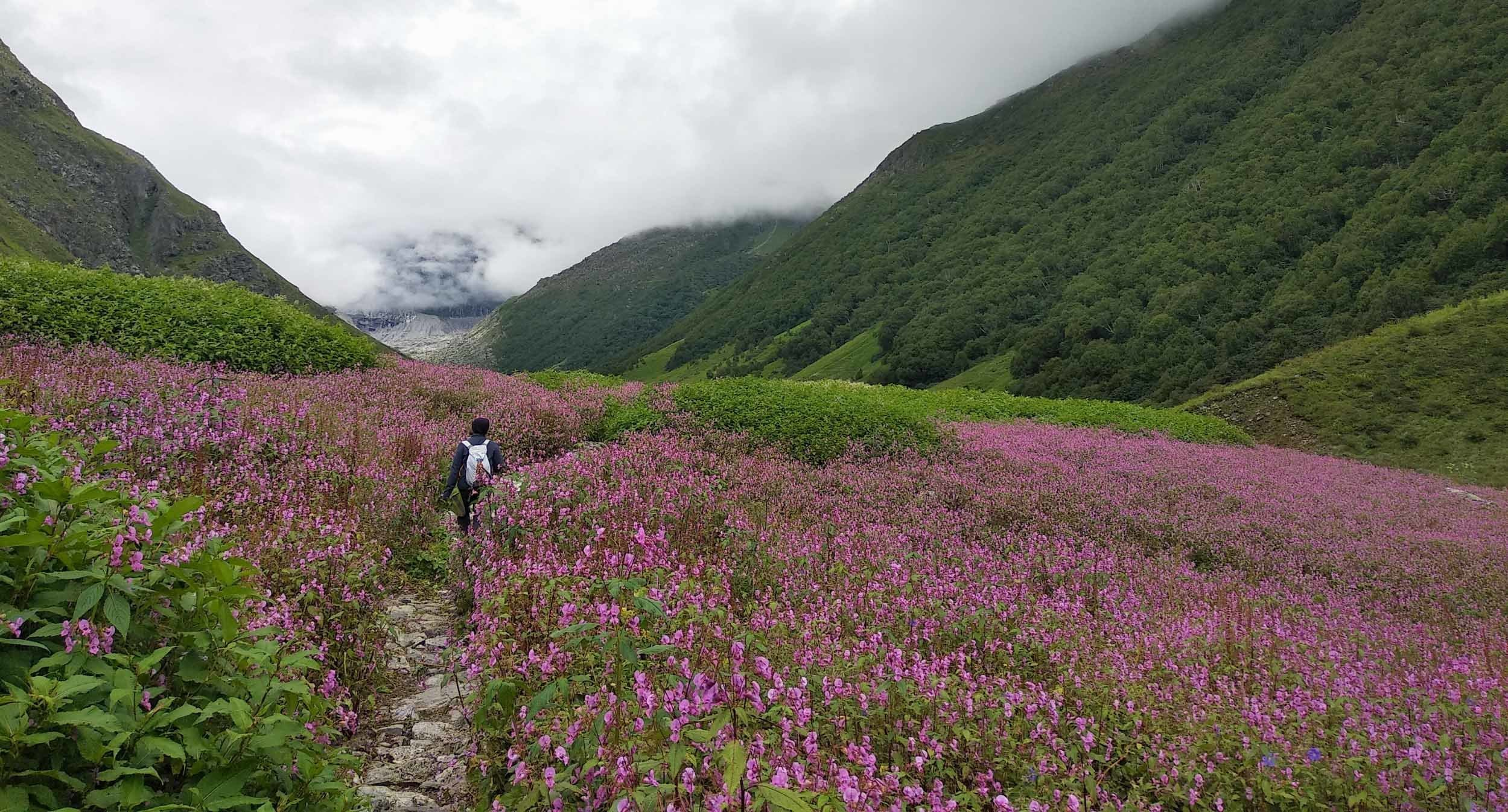 Valley of Flowers & Hemkund Sahib Trek   Pravaasah Holidays