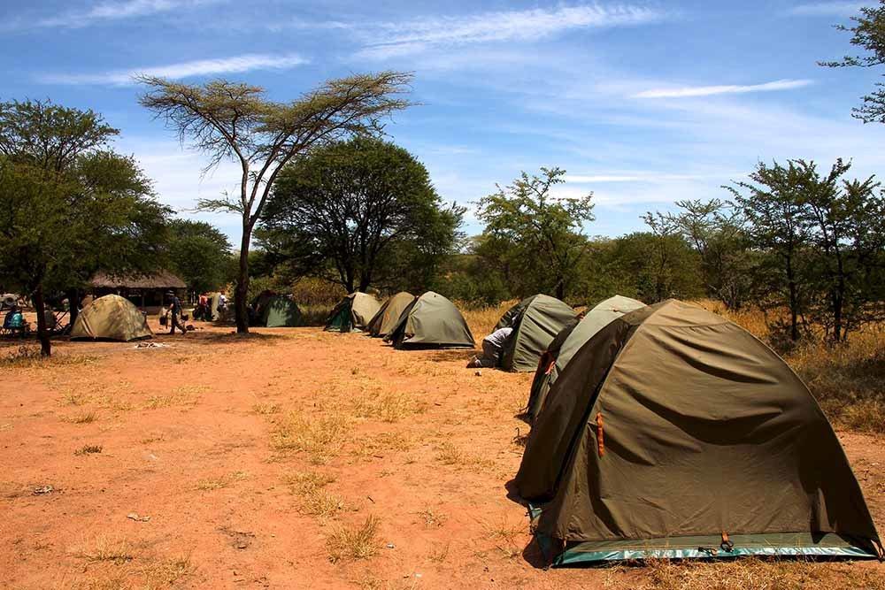 Camping Safaris - Collection