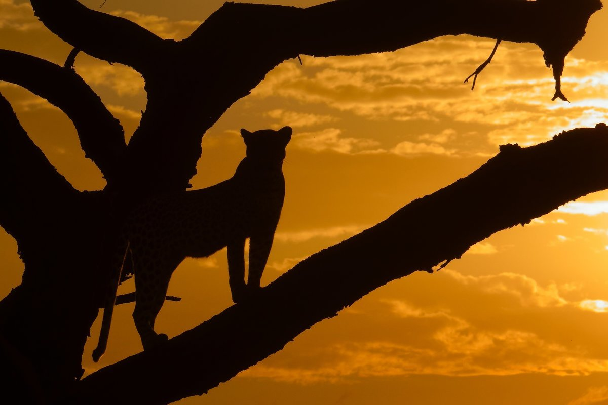 African Wildlife Safaris - Collection