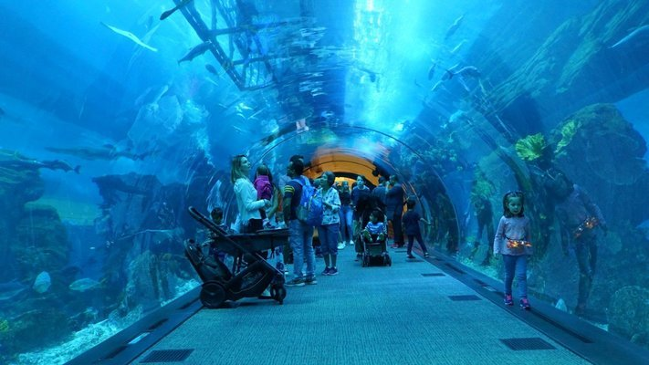 Burj Khalifa + Dubai Aquarium and Underwater Zoo Combo Tickets - Tour