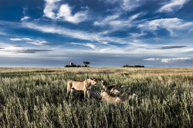 Serengeti   Ngorongoro Safaris - Collection