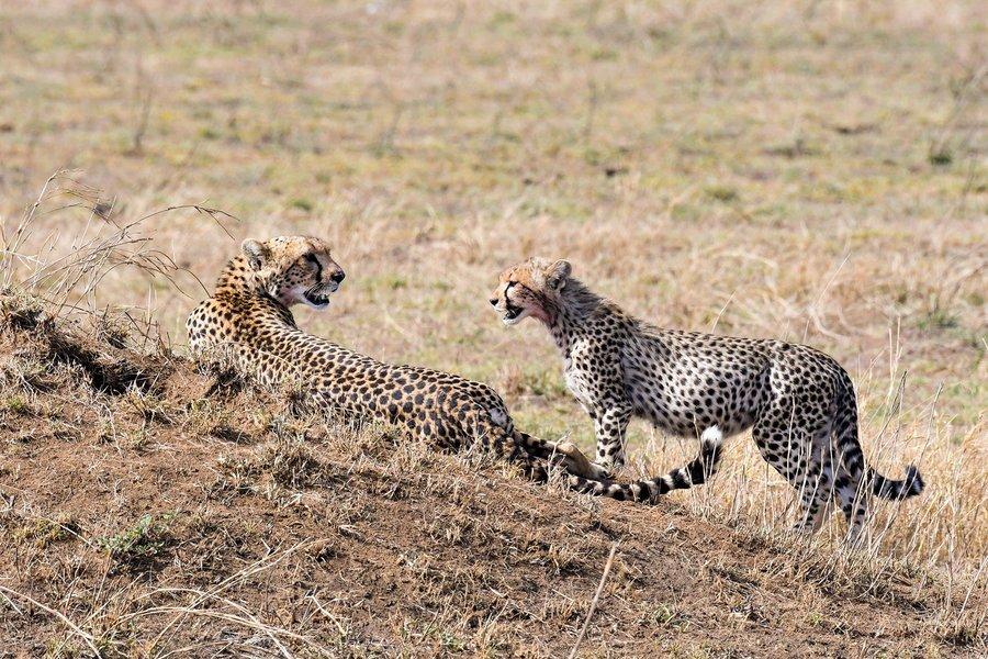 Discover Tanzania Camping Safari - Tour