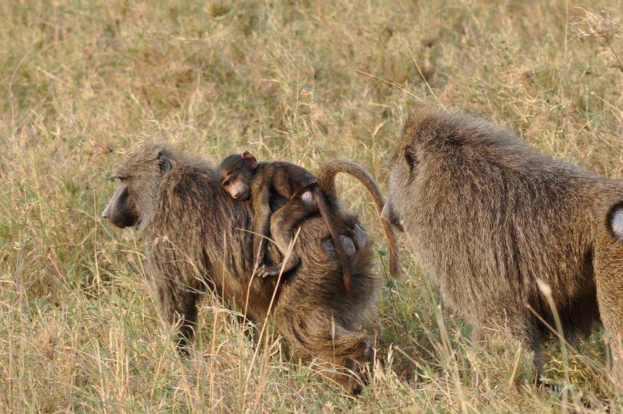 Tanzania Explorer Camping Safari - Tour