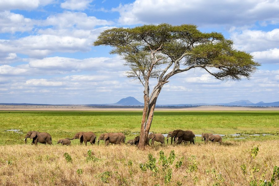 Call of the wild Camping Safari - Tour