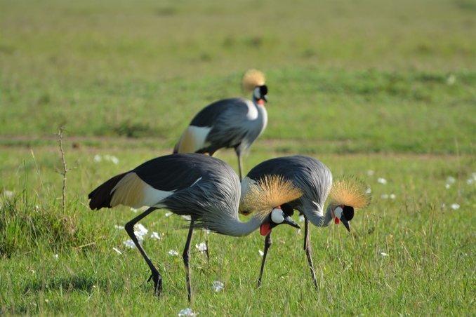 Kenya Tours - Collection