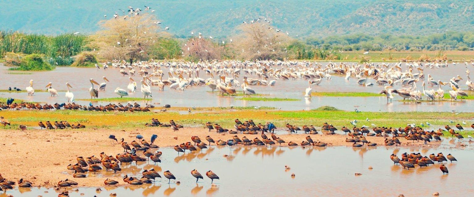 Lake Manyara Day Trip - Tour
