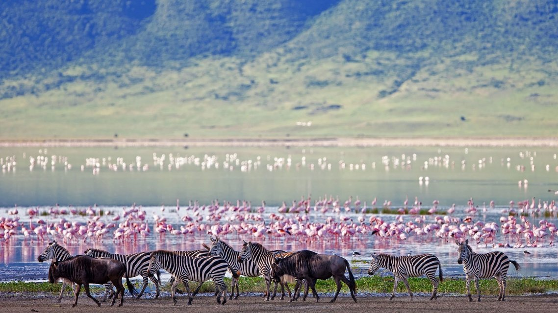 Ngorongoro Crater Day Trip - Tour