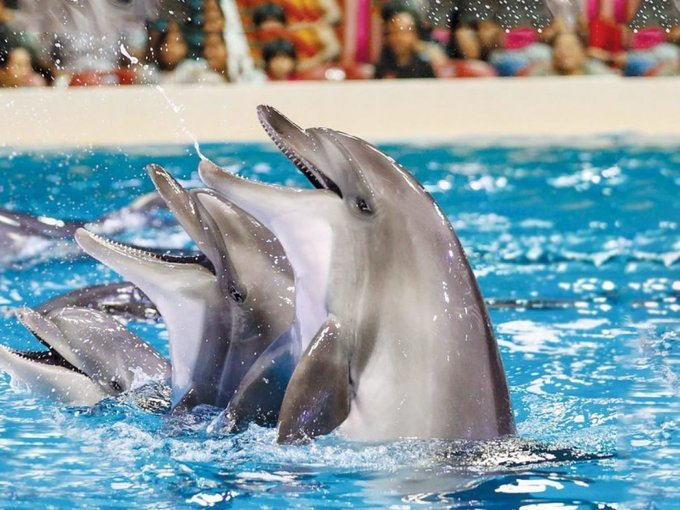 Dubai Dolphinarium - Tour
