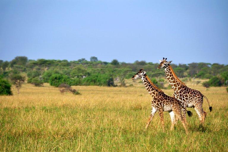 Tanzania and Kenya's Wild parks - Tour